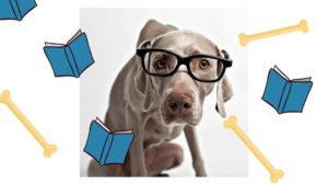Read to a Dog @ Bourbonnais Public Library